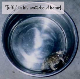 """Tuffy"" in his waterbowl home!"
