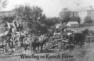 Wheating on Kuenzli Farm
